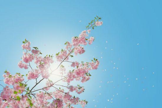 vue du printemps