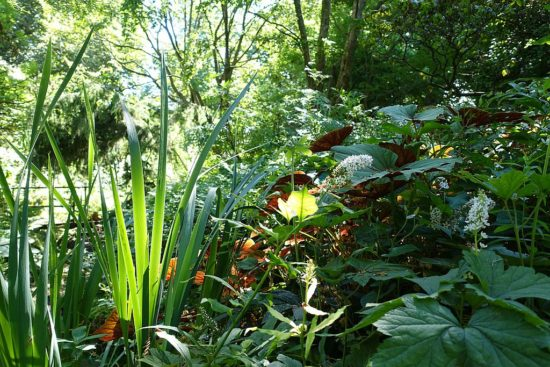 Odeurs du jardin des plantes à Paris