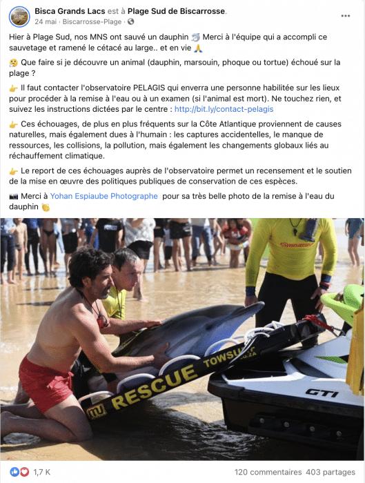 Hier à Plage Sud, nos MNS ont sauvé un dauphin 🐬 Merci à l'équipe qui a accompli ce sauvetage et ramené le cétacé au large.. et en vie 🙏 🤔 Que faire si je découvre un animal (dauphin, marsouin, phoque ou tortue) échoué sur la plage ?  👉 Il faut contacter l'observatoire PELAGIS qui enverra une personne habilitée sur les lieux pour procéder à la remise à l'eau ou à un examen (si l'animal est mort). Ne touchez rien, et suivez les instructions dictées par le centre : http://bit.ly/contact-pelagis 👉 Ces échouages, de plus en plus fréquents sur la Côte Atlantique proviennent de causes naturelles, mais également dues à l'humain : les captures accidentelles, le manque de ressources, les collisions, la pollution, mais également les changements globaux liés au réchauffement climatique. 👉 Le report de ces échouages auprès de l'observatoire permet un recensement et le soutien de la mise en œuvre des politiques publiques de conservation de ces espèces. 📸 Merci à Yohan Espiaube Photographe  pour sa très belle photo de la remise à l'eau du dauphin 👏